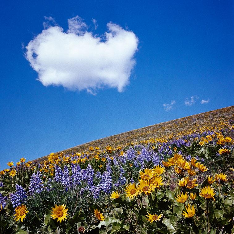 Cloud, Dalles Mt. Road