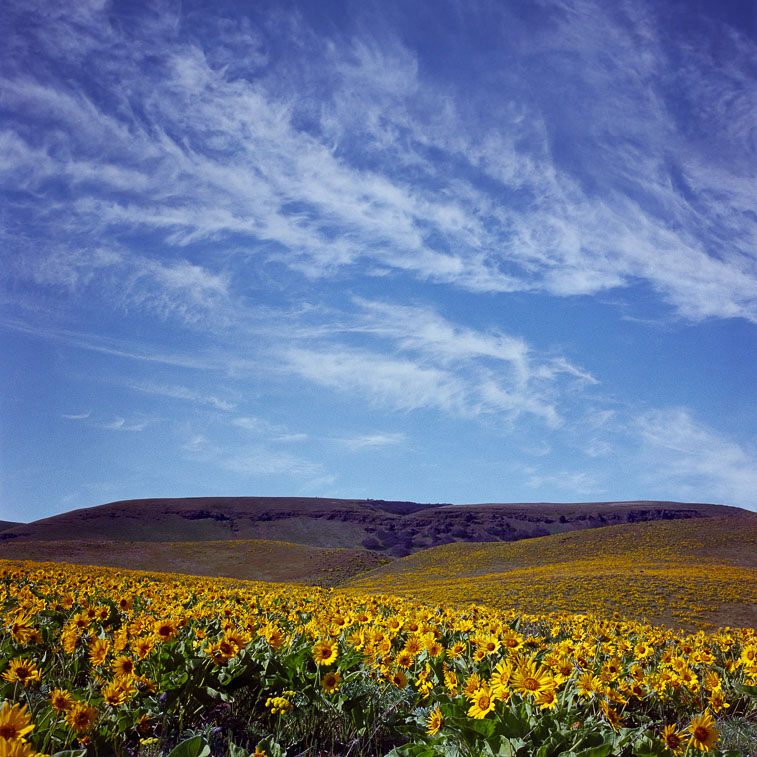 Sky and Flowers, Dalles Mt. Road