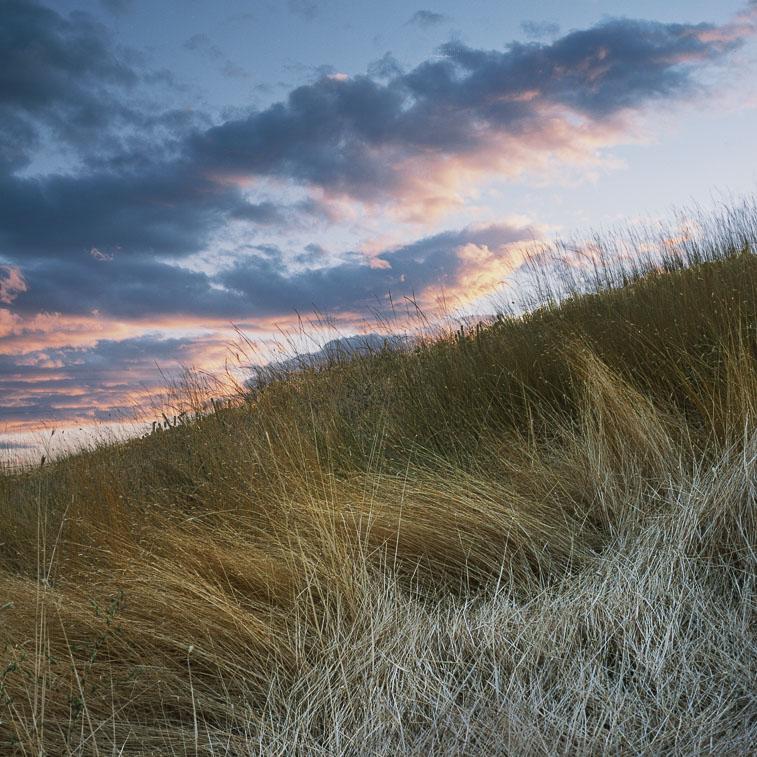 Grass, Dalles Mt. Road