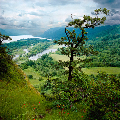 just-below-crown-point-columbia-river-gorge-or-8x8.jpg