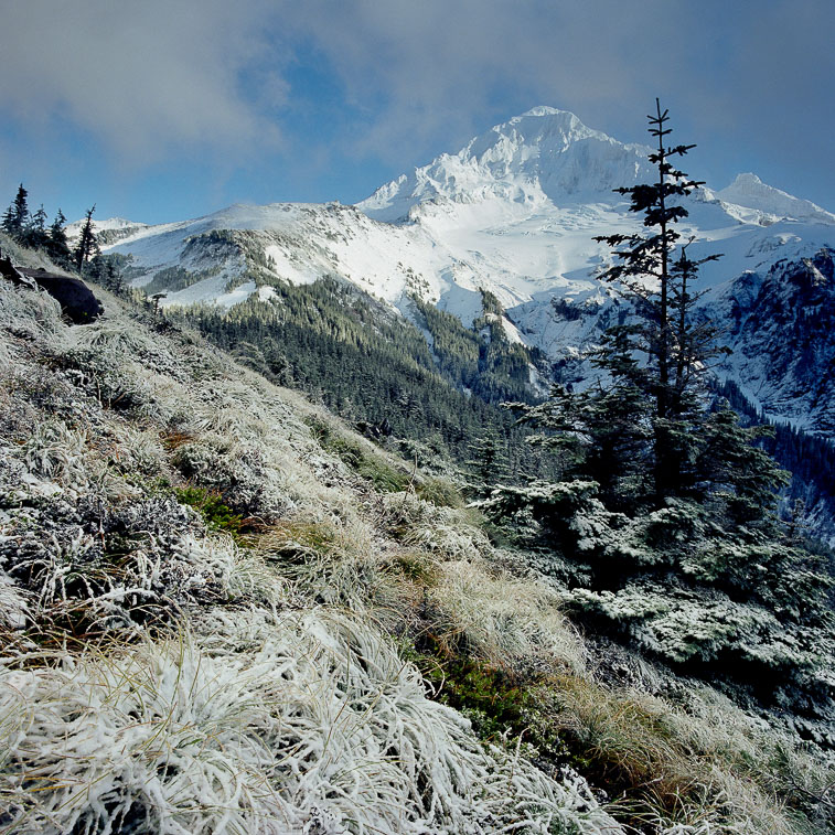 McNeil Point Frost