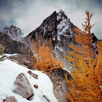 dragontail-peak-and-larch-tree-in-the-enchantments-near-levenworth-wa-8x8.jpg