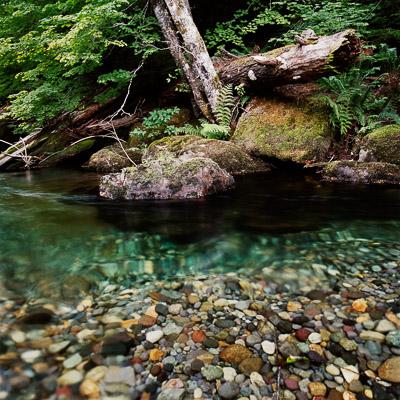 olallie-creek-mt-rainier-national-park-wa-8x8.jpg