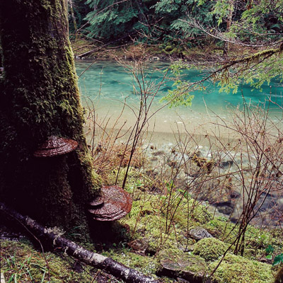 siouxon-creek-2-near-yale-lake-wa-8x8.jpg